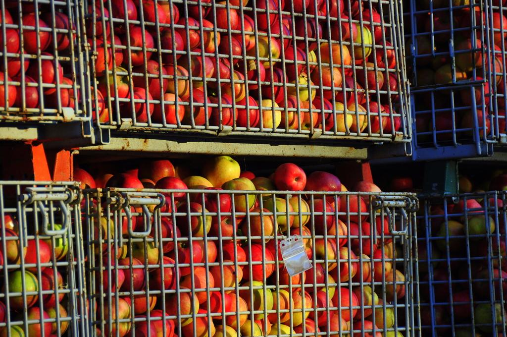 リンゴ満タン