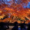 高台寺のライトアップ紅葉