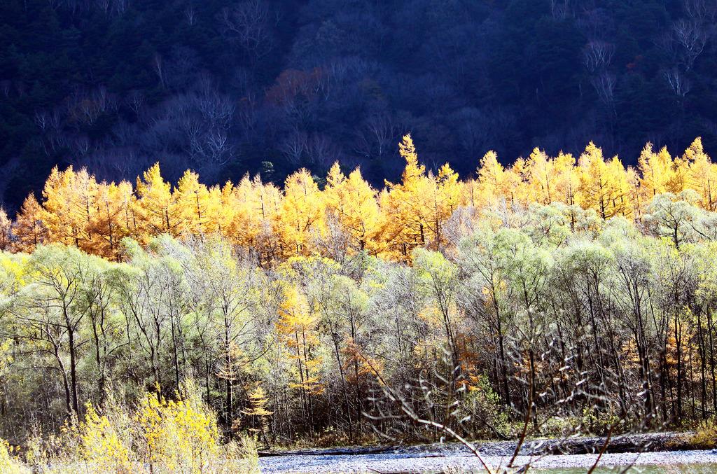 色づく梓川河畔