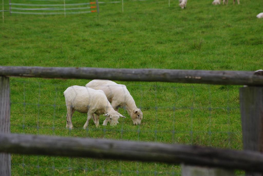 羊さん夫婦
