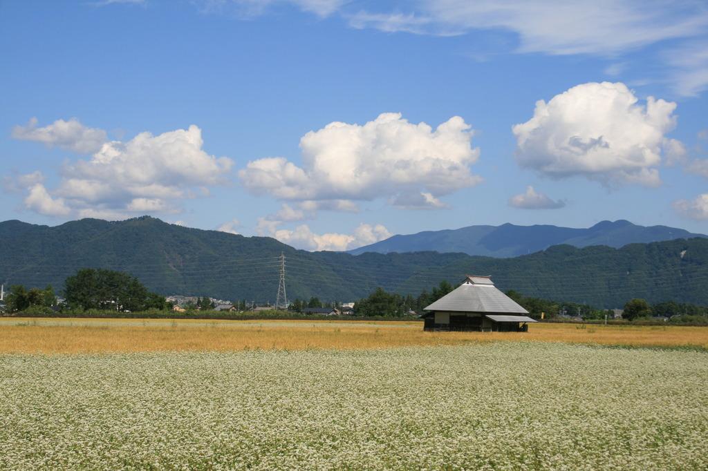 あづみ野のソバ畑