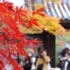 紅葉、それぞれの想い。