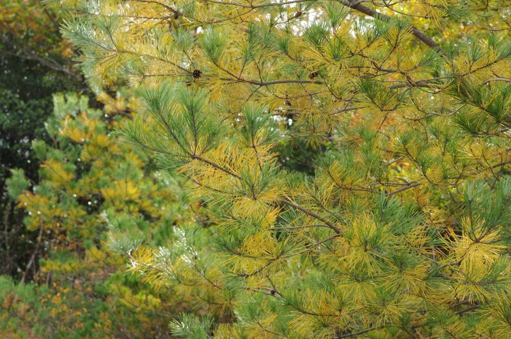 秋と冬の間