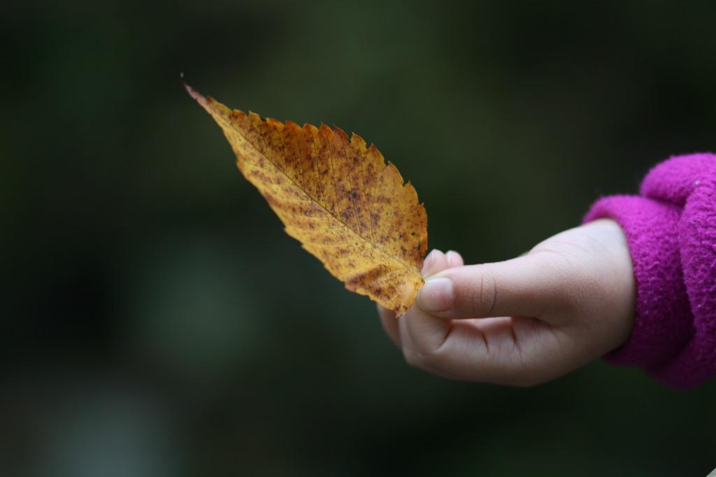 秋をつまむ
