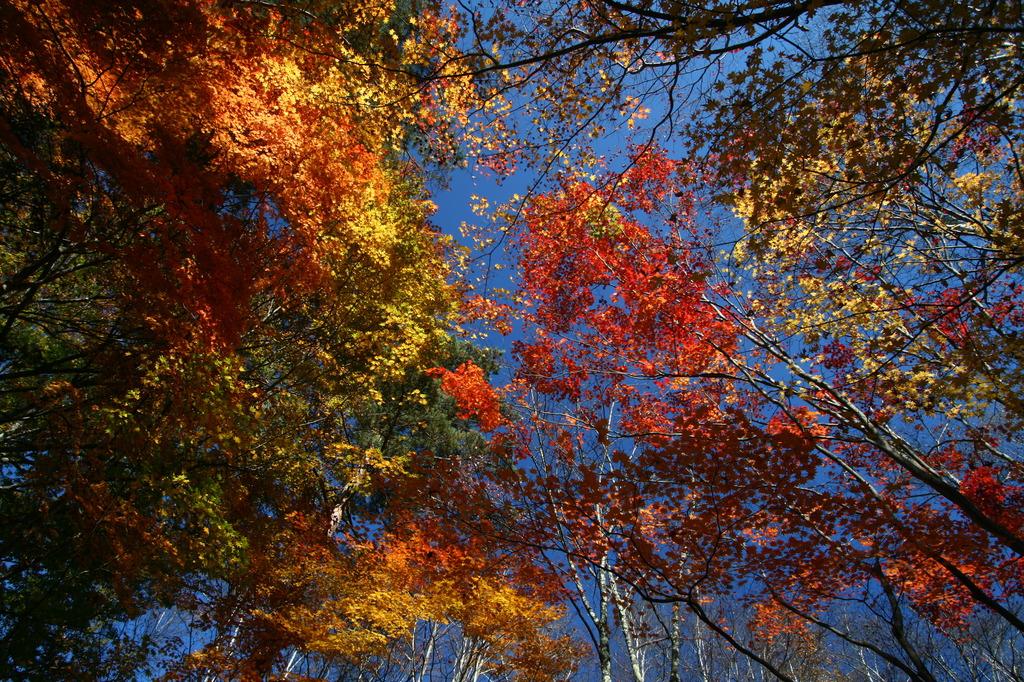 秋色天然色