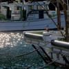 桜海老の漁港