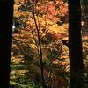 古代の森の....
