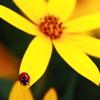 黄色い飛び込み台