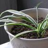 ベランダの観葉植物(カメラテスト)