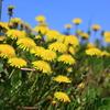 土手に咲く小花