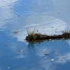 白金の青い池