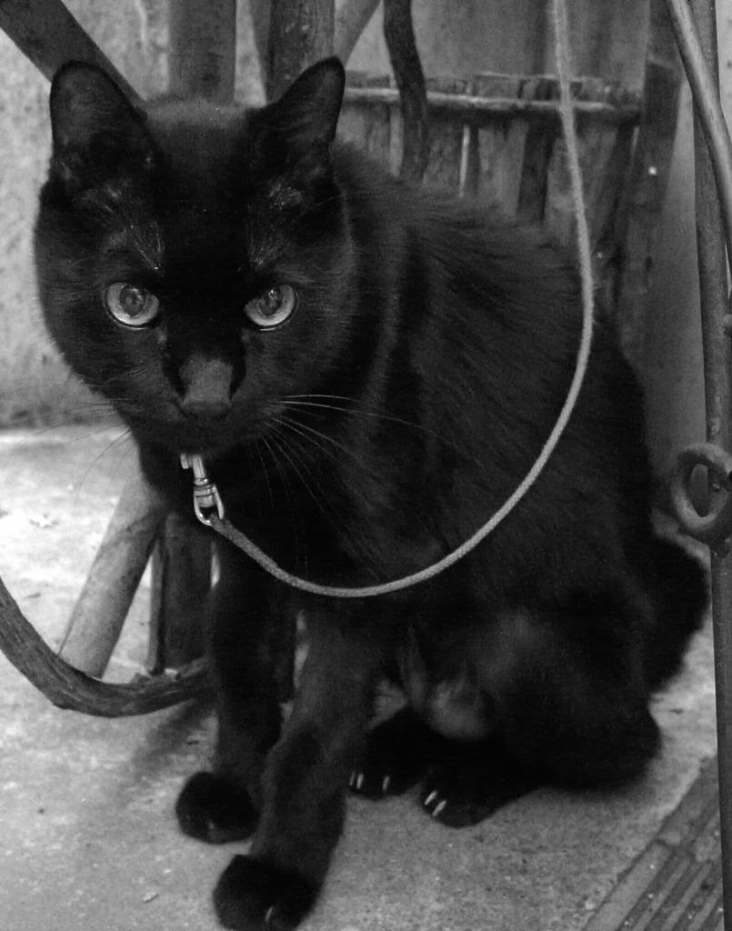 近所の黒猫さん