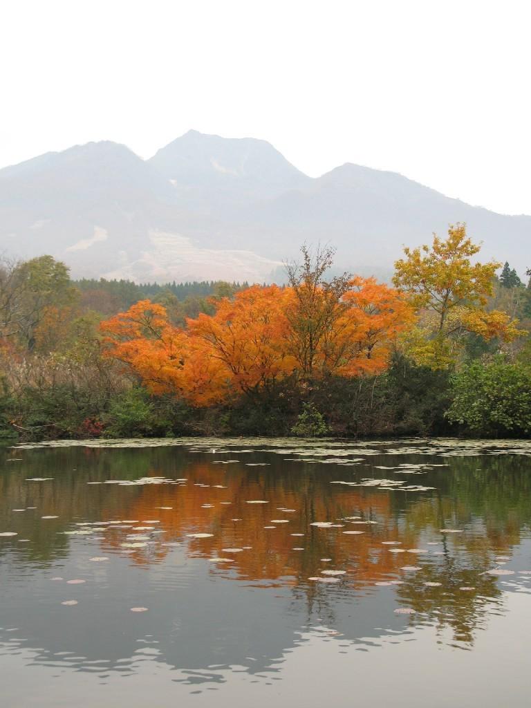 いもり池の秋