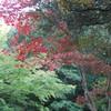 紅葉(弥彦)