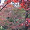 弥彦 もみじ谷の紅葉