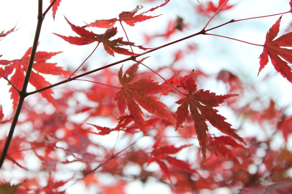 古城公園の紅葉