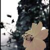 季節はずれの花。
