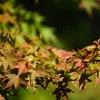 蜘蛛と紅葉