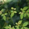 葉の色気(東山植物園)
