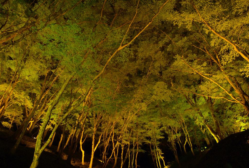 香嵐渓の紅葉