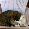 Siesta : We Love Cat