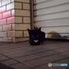 Finding Nagasaki cat : チビクロ II
