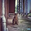 Finding Nagasaki cat