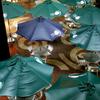 Rainy season : Singing in the rain