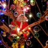 tree in santa