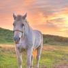 草千里のお馬さん2