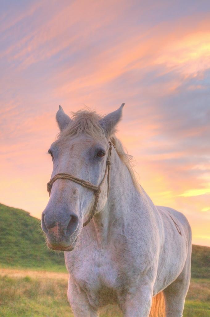 お馬さん。
