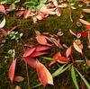 秋色の落ち葉