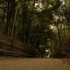 嵐山、駆ける