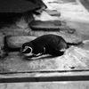 秋の動物園にいた退屈そうなペンギン