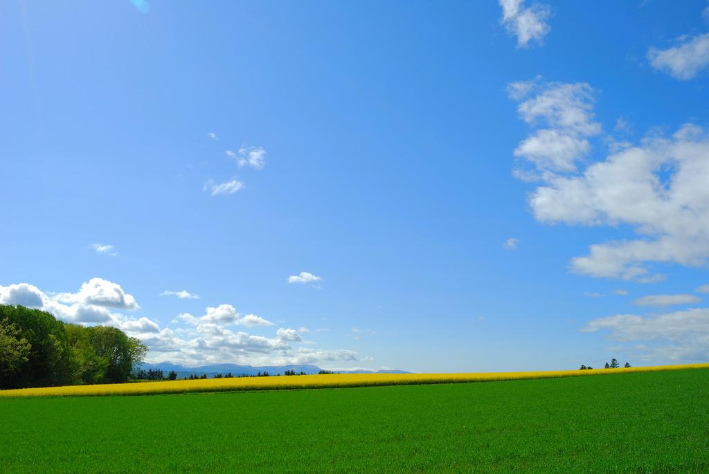 青と白と緑と黄色