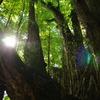樹齢900年
