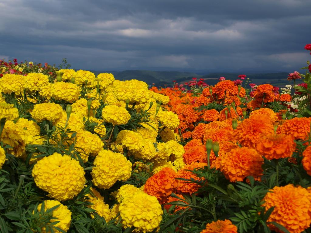 黄色と橙色