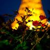 tower&rose