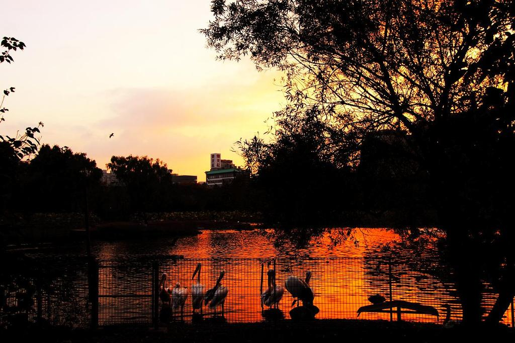金紅の水辺