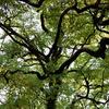 捩れた樹々の構造