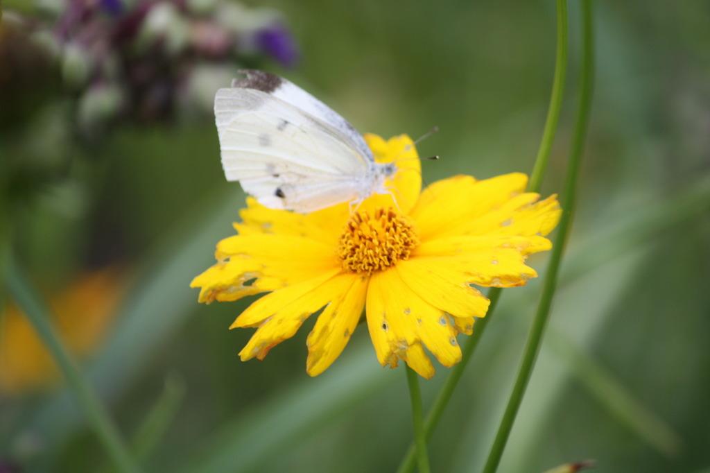 蝶のお休み