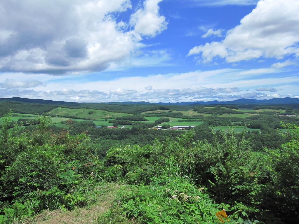 夏の青空と緑