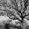 力強くたたずむ木
