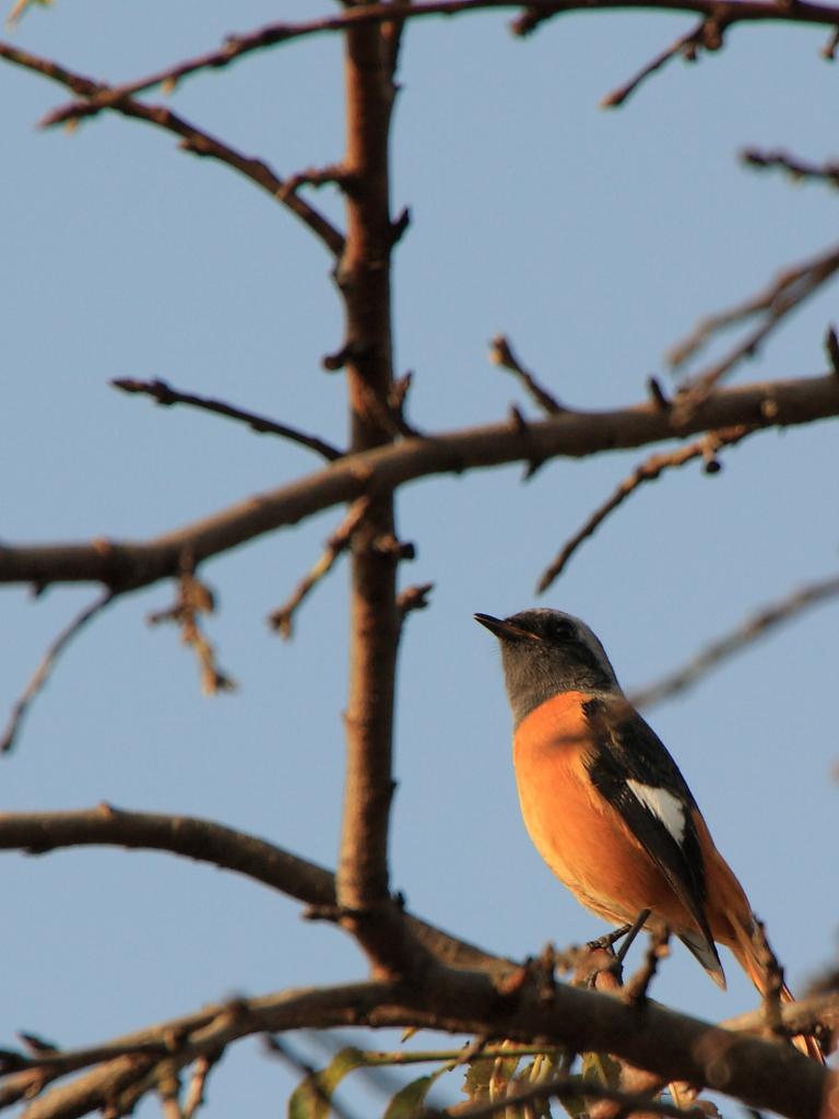 ある日の小鳥Ⅰ