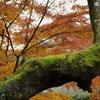 主役交代^o^/ (成田山公園の秋④)