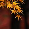 成田山公園の秋①