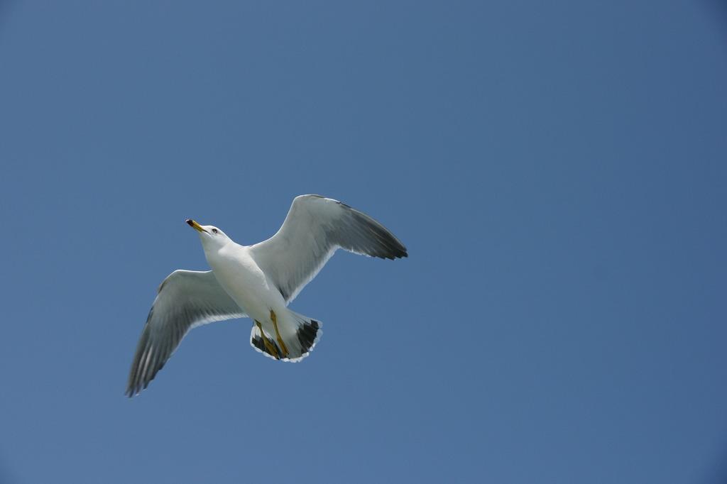 空へ羽ばたけ