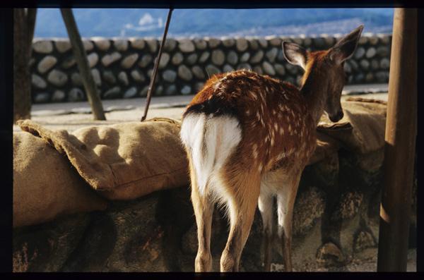 鹿のお尻は幸せな形