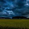 刈り取り待つ稲の夕景