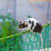 ネズミの大冒険